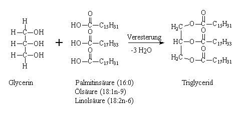abbildung 1 bildung eines triglycerids am beispiel der veresterung von glycerin und den drei blicherweise am hufigsten auftretenden fettsuren - Gesattigte Fettsauren Beispiele